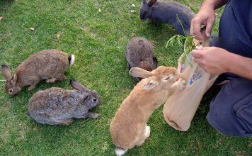 Fedding rabbits - What do rabbits eat