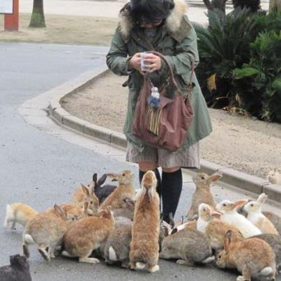Woman feeding rabbits - what to feed rabbits