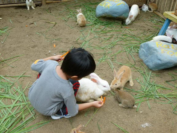 what to feed rabbits - Kid feeding rabbits