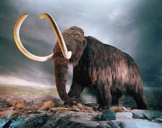 What did mammoths eat?