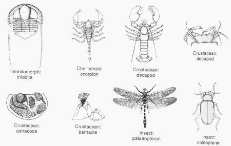Animal Facts on Arthropods Facts Arthropods Facts   Facts About Insects For Kids