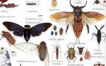 facts about insects - characteristics of insects - classification of classification
