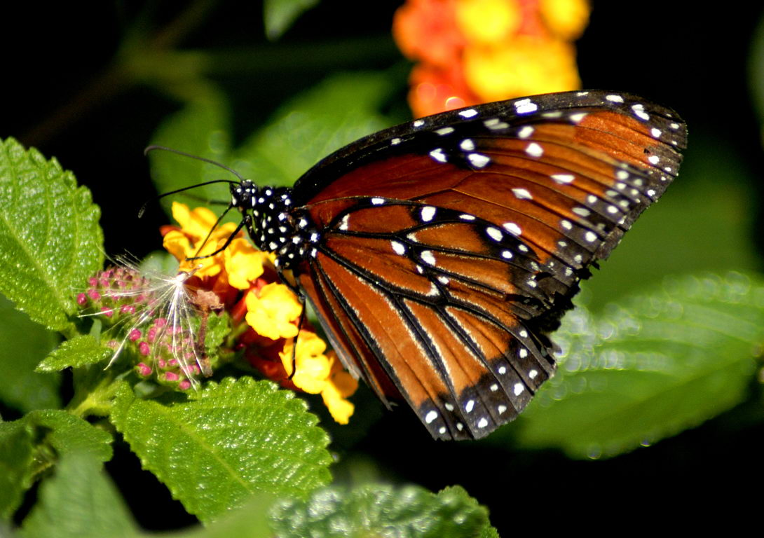 butterfly facts for kids butterfly habitat u0026 diet
