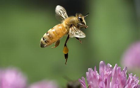 facts about honey bees for kids