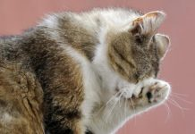 cats pictures - do female cats spray
