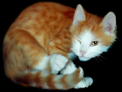lovely cat - cat facts for kids