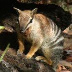 Endangered Animals in Australia | List of 6 Critically Endangered Animals