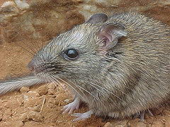 critically endangered animals in australia