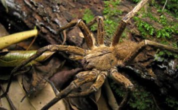 how long do spiders live in captivity | spiders lifespan