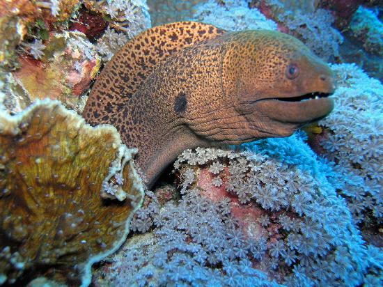 interesting moray eel facts
