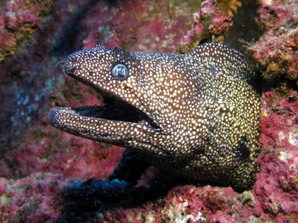 moray eel facts
