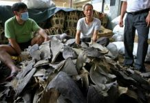 shark finning facts