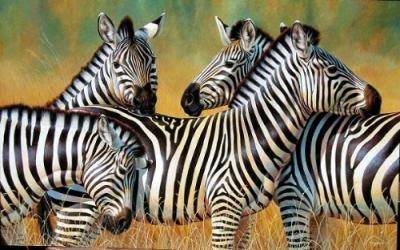 zebra facts for kids | zebra
