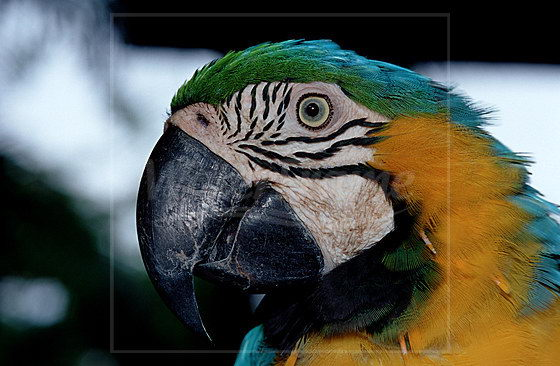 A close image of Blue and yellow macaw | Image Courtesy of neu.water-frame.com