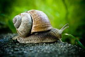 snail facts for kids | snail