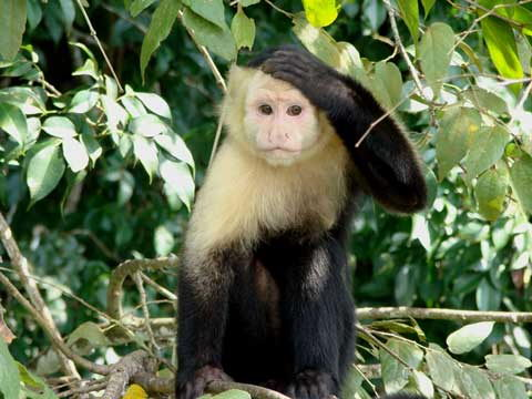facts about monkeys for kids