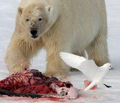 do polar bears eat penguins