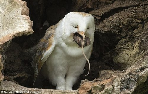 what do owls eat