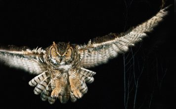 facts about nocturnal animals