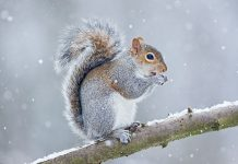 squirrel facts for kids