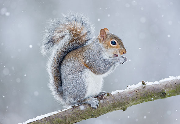 Squirrel Facts For Kids | Everything about Squirrels ...
