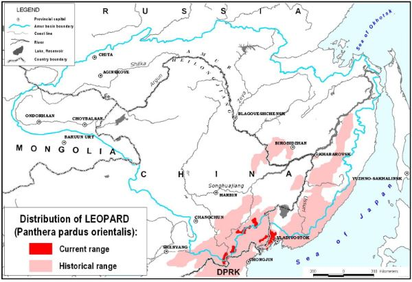 AMur leopard distribution map