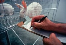 Essay on Animal Testing for Cosmetics