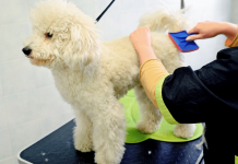 Dog Hair Brushing Tips