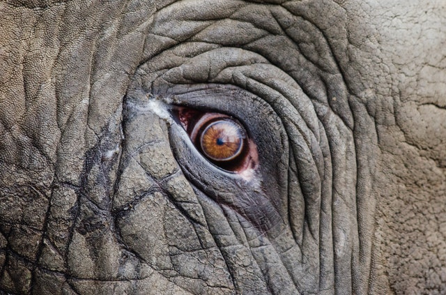 The Most Relevant Facts about Endangered Species in 2019