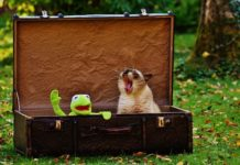 travelling with cat