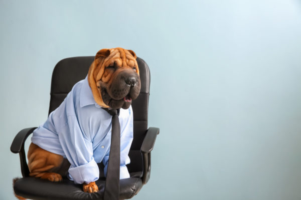 Cute funny dog dressed as businessman sitting on chair
