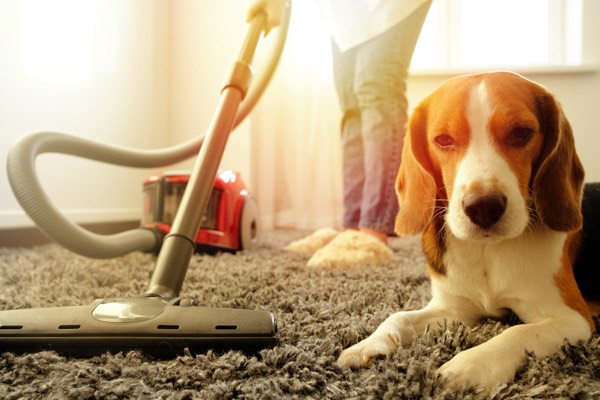 Girl vacuuming with a dog
