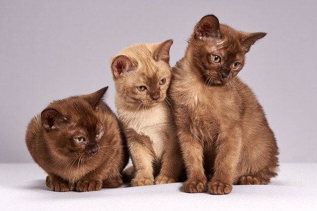 pet insurance for three cats