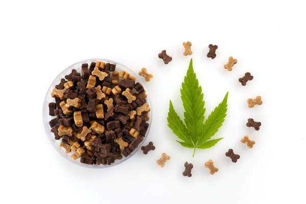 Benefits Of Using CBD For Your Dog